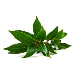 21NH_ingredients_camphor_leaf