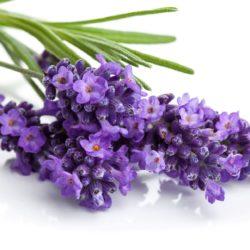 21NH_ingredients_lavender flower