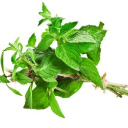21NH_ingredients_marjoram