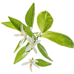 21NH_ingredients_neroli