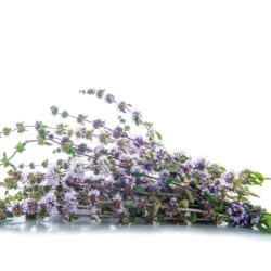 21NH_ingredients_pennyroyal
