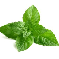21NH_ingredients_peppermint