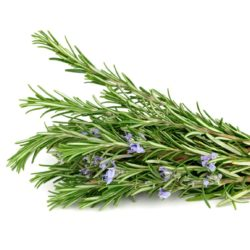 21NH_ingredients_rosemary